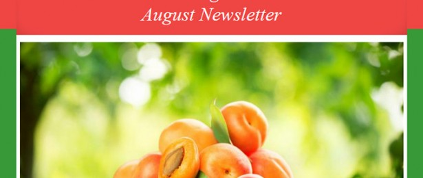 August Newsletter – Mindful Eating