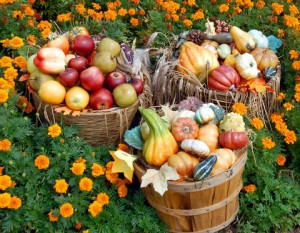 fall superfoods - nashua nutrition